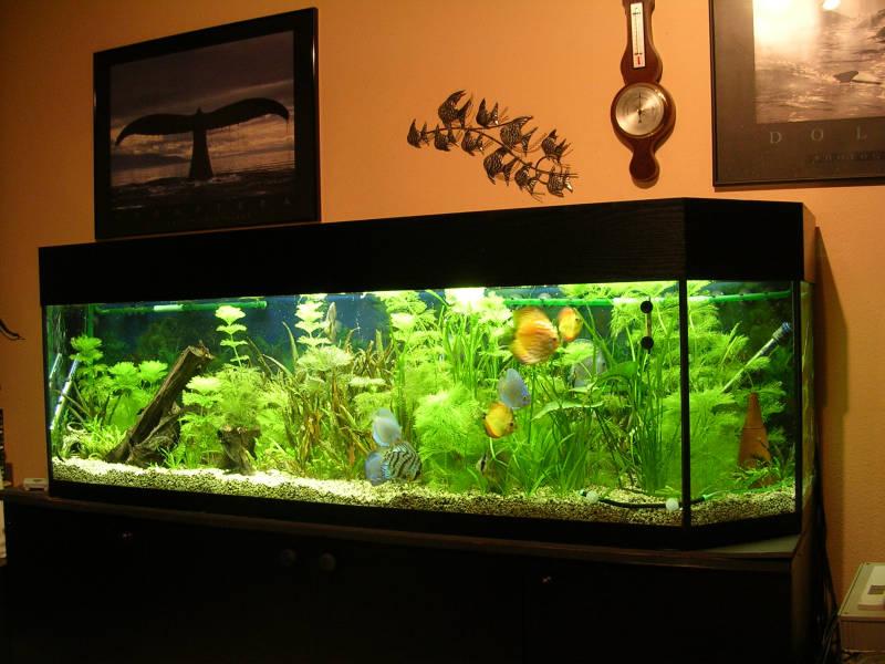 Aquarium ponzini wohnzimmer - Aquarium wohnzimmer ...