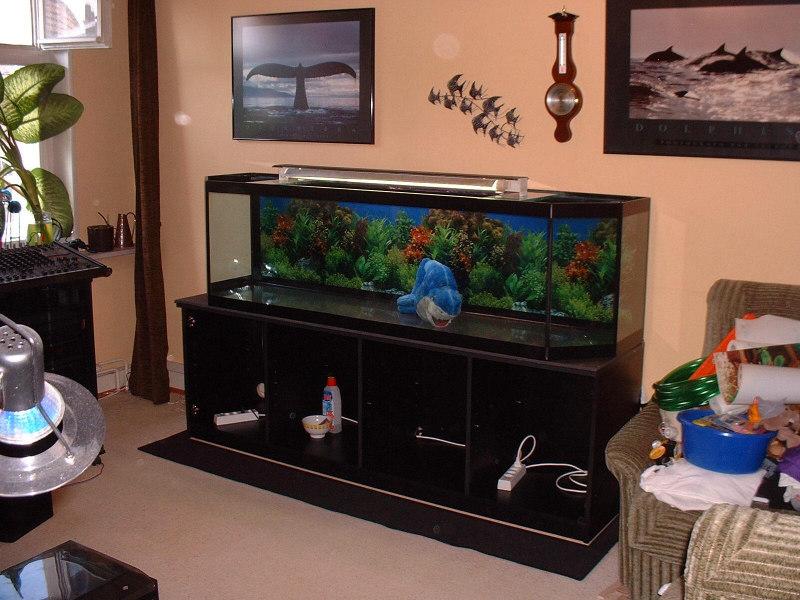 aquarium ponzini wohnzimmer - Aquarium Wohnzimmer